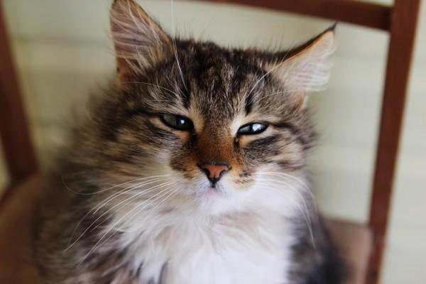 Фото кот