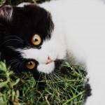 Фото: Животные (Гелиос 44-2)