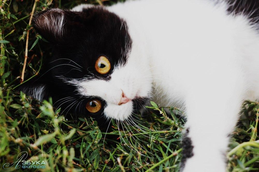 Фотки кошек